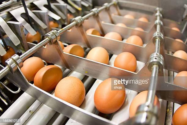 Egg factory.production ligne avec œufs frais