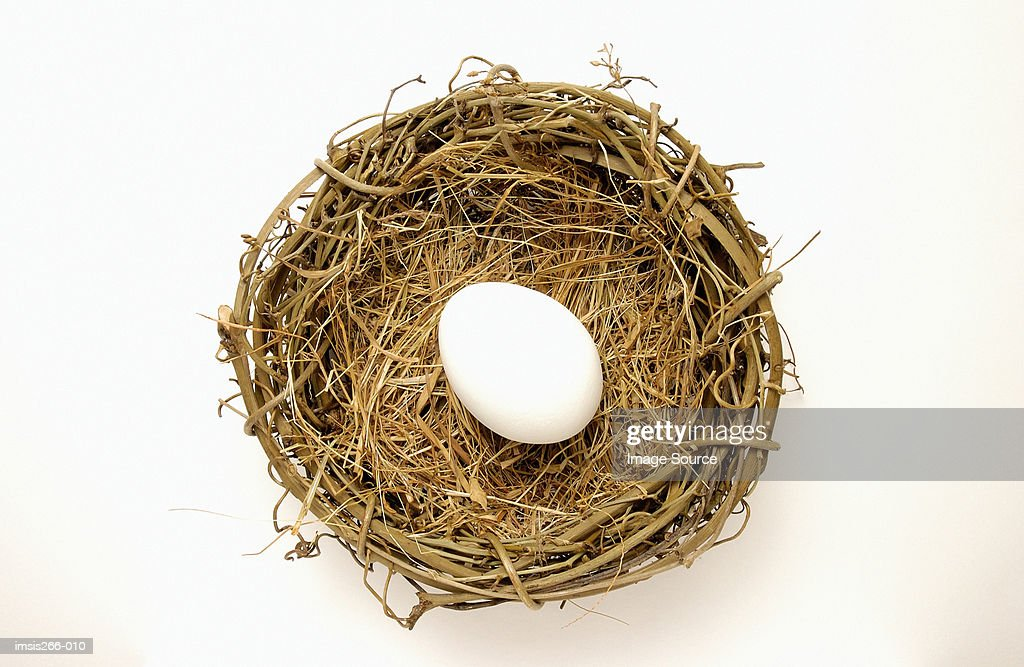 Egg in a nest