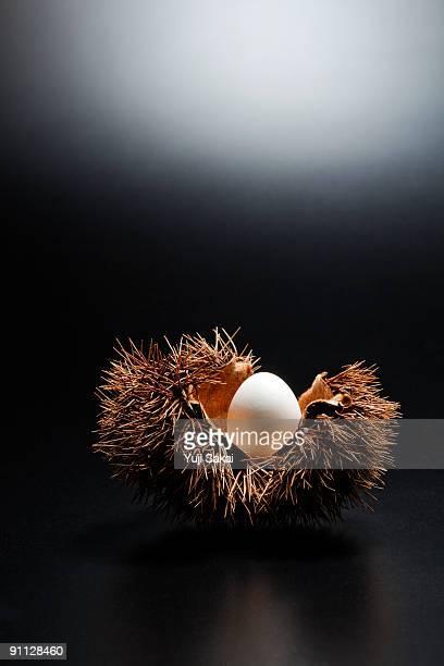 egg in the chestnut bur