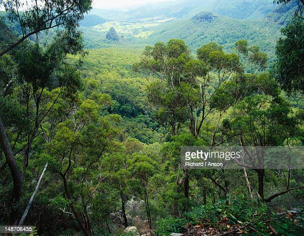 Egg Rock, viewed from Bellbird Lookout - Lamington National Park, Queensland
