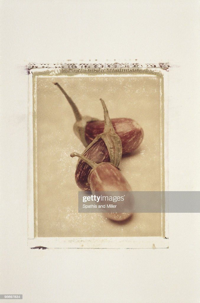 Eggplants : Stock Photo