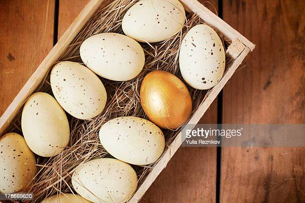 Eggs and one golden egg in nest basket
