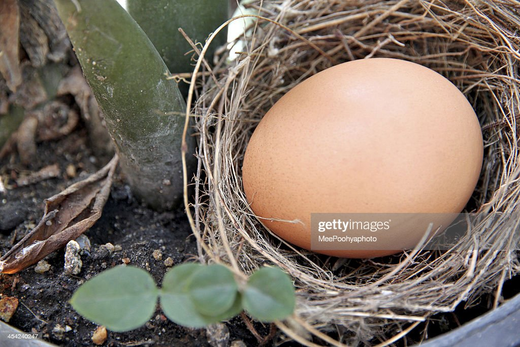 Eggs in a nest. : Stock Photo