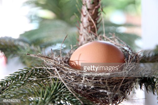 Eggs in nest on the tree. : Stock Photo
