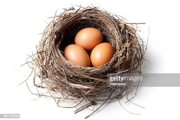 Eggs in the nest