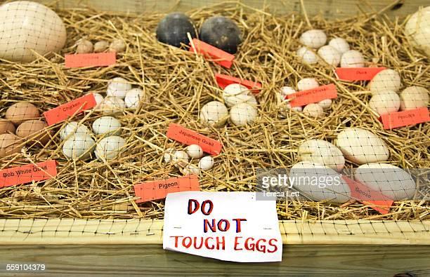 Eggs on display