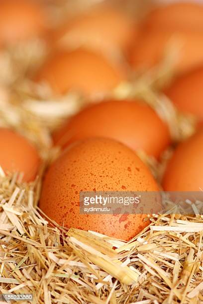 Eggs On Straw