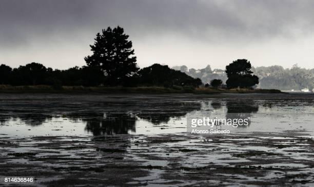 Egret at Bolinas Lagoon