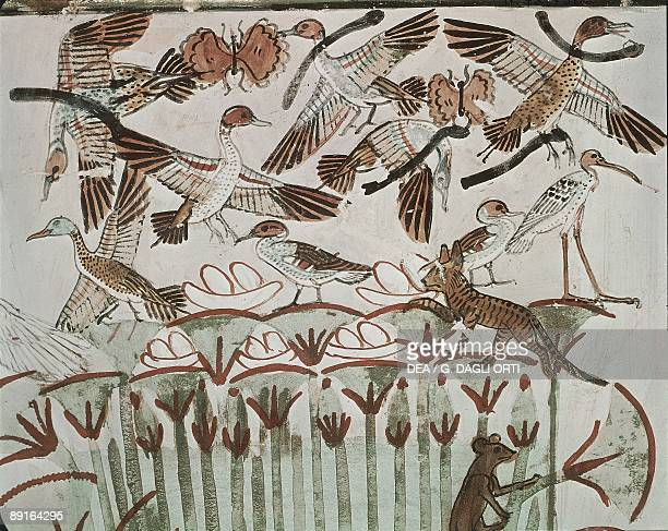 Egypt Ancient Thebes Shaykh 'Abd alQurnah mural of marshland fowl and cats at Tomb of Menna