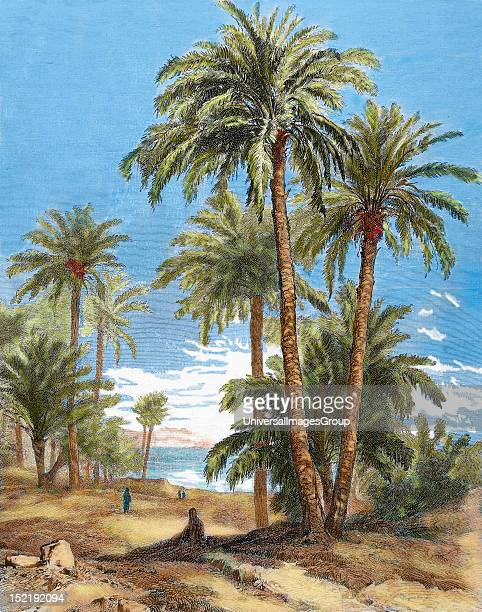 Egypt Oasis Engraving by Brend'Amour in 1882