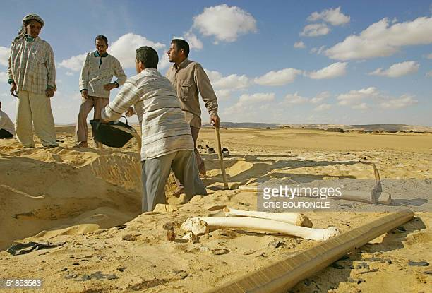 Egyptian antiquities workers excavate 12 December 2004 in the Valley of the Golden Mummies in Egypt's Bahariya oasis 375 kms west of Cairo Egyptian...