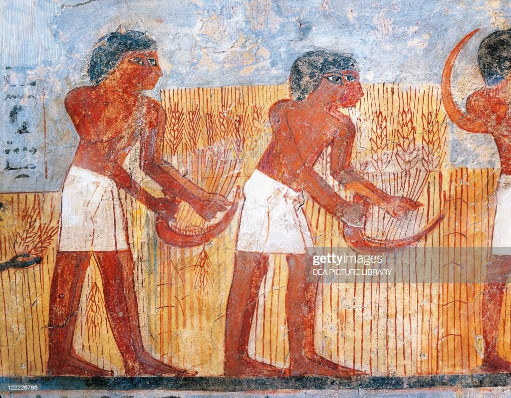 Egyptian civilization New Kingdom Fragment of wall painting depicting a harvesting scene From the tomb of Unsu at west Thebes Detail