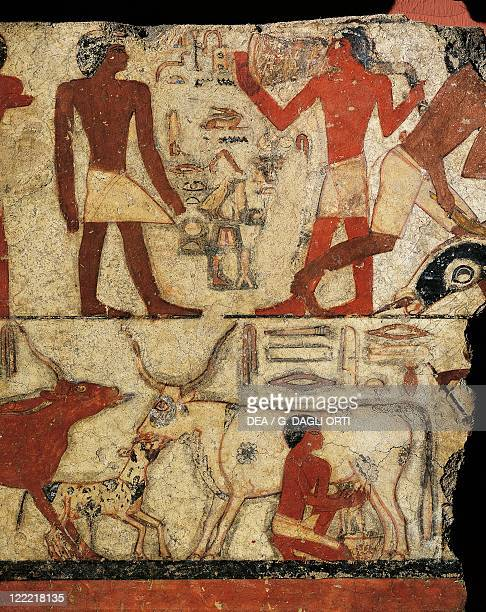 Egyptian civilization Old Kingdom Dynasty V Fragment of wall painting depicting milking scene From the tomb of Metchetchi at Saqqara