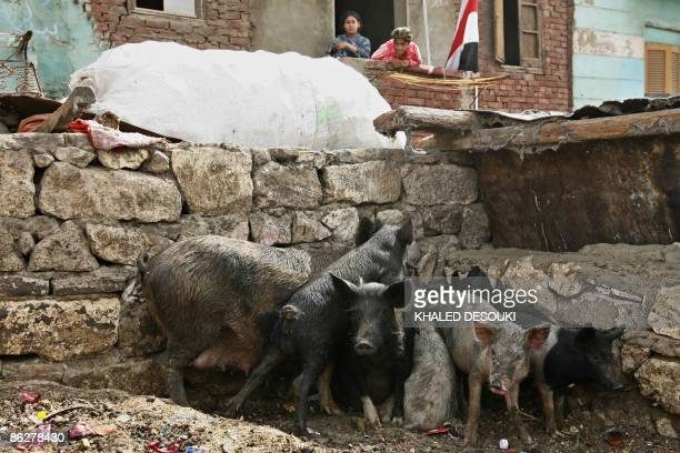 Egyptian women look from their home's balcony at a pig farm in the predominantly Coptic Christian district of Old Cairo on April 29 2009 Egypt...