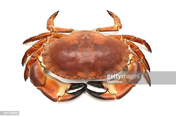 Eidible Crab