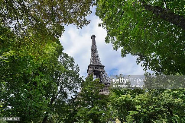 Eiffel tower through the trees