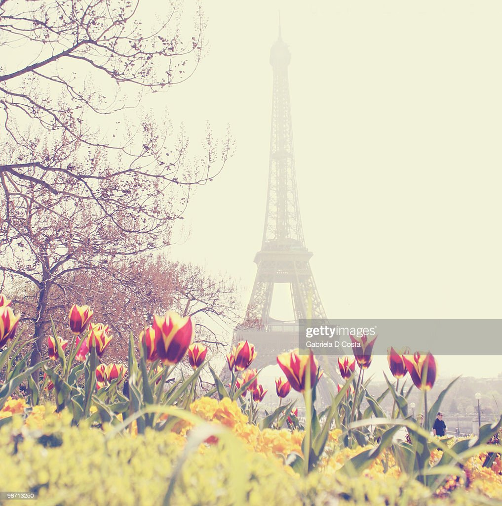 Eiffel Tower with tulips : Stock Photo