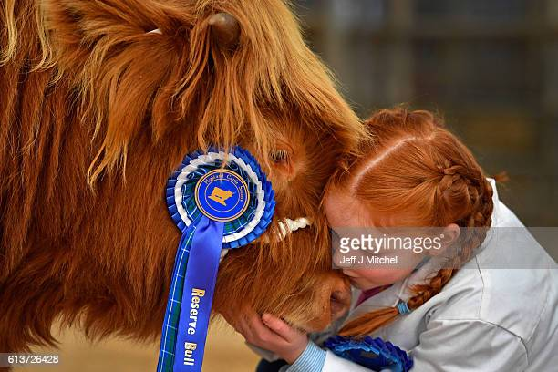 Eight year old Kate Cameron stands with Abernethy at the one hundred and nineteenth annual autumn sale of pedigree highland cattle on October 10 2016...