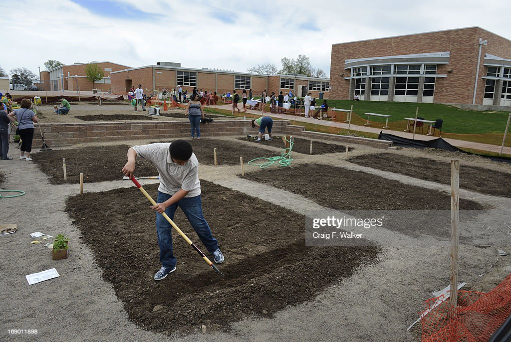 Eighth grader Shacobie Garcia works in his plot during the North Middle School Garden Festival in Aurora, CO May 18, 2013. Garcia was on the garden's planning committee and is the only student to purchase his own plot. The celebration marked the opening of the first school-based community garden in Aurora Public Schools. The project, funded by The Piton Foundation, was made possible through a partnership of Aurora Public Schools, Denver Urban Gardens (DUG), and Anschutz Medical Campus Department of Family Medicine and BRANCH, a multi-disciplinary student organization from the medical campus. A second garden is scheduled to open later this year at Hinkley High School.