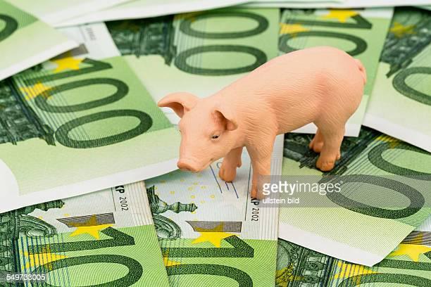 Ein Schwein steht auf Eurogeld Banknoten Steigende Kosten für Futtermittel in der Landwirtschaft Sinkende Erträge beim Schweinefleisch
