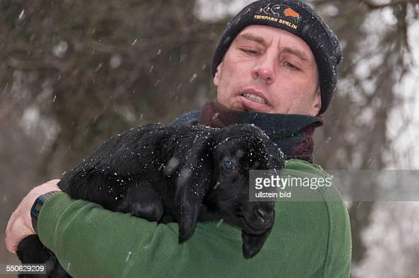 Eines der drei Anfang Januar 2014 im Tierpark BerlinFriedrichsfelde geborenen FettsteißSchafen auch HissarSchaf genannt mit Tierpfleger René Vieth...