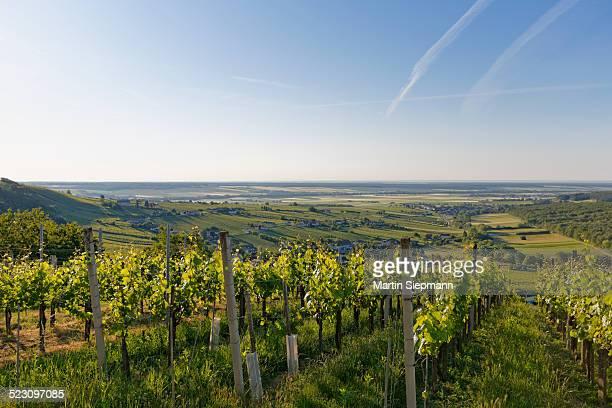 Eisenberg vineyard, Eisenberg an der Pinka, quaint wine growing region, Southern Burgenland, Burgenland, Austria