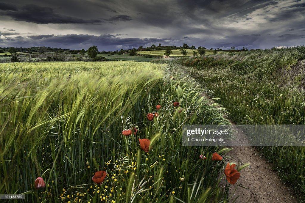 El Camino : Foto de stock