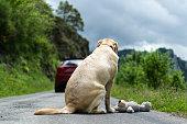 Un perro ve como se marcha el coche