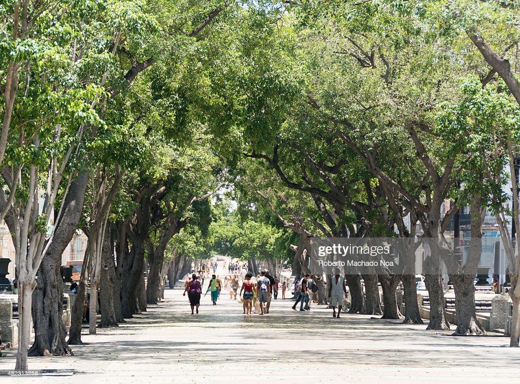 El Prado People walk under a treelined road Trees take up most of the frame Several pedestrians walk the street underneath