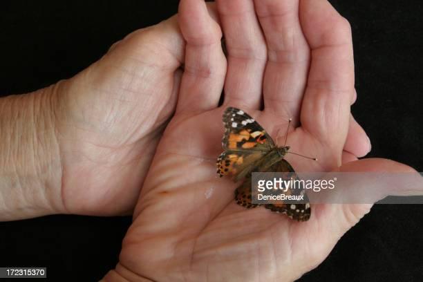 Ältere Hand hält Butterfly
