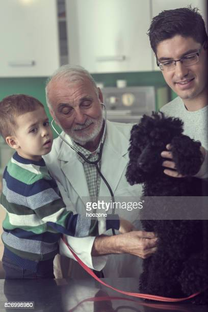 Elder Veterinarian Treating a Family Dog