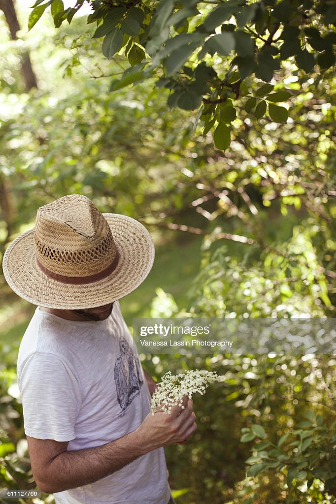 Elderflower Picking : Stock Photo