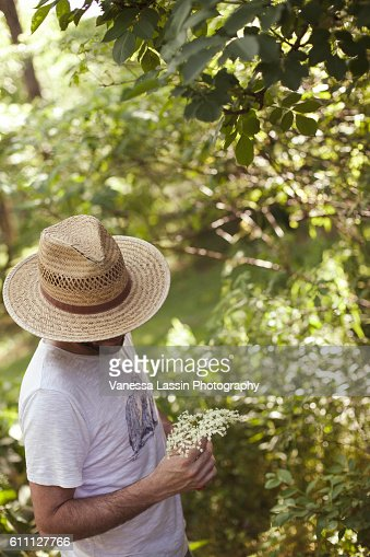 Elderflower Picking : Stock Photo