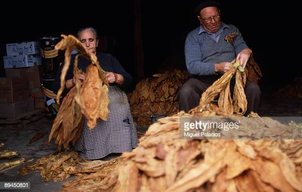 Elderly drying tobacco