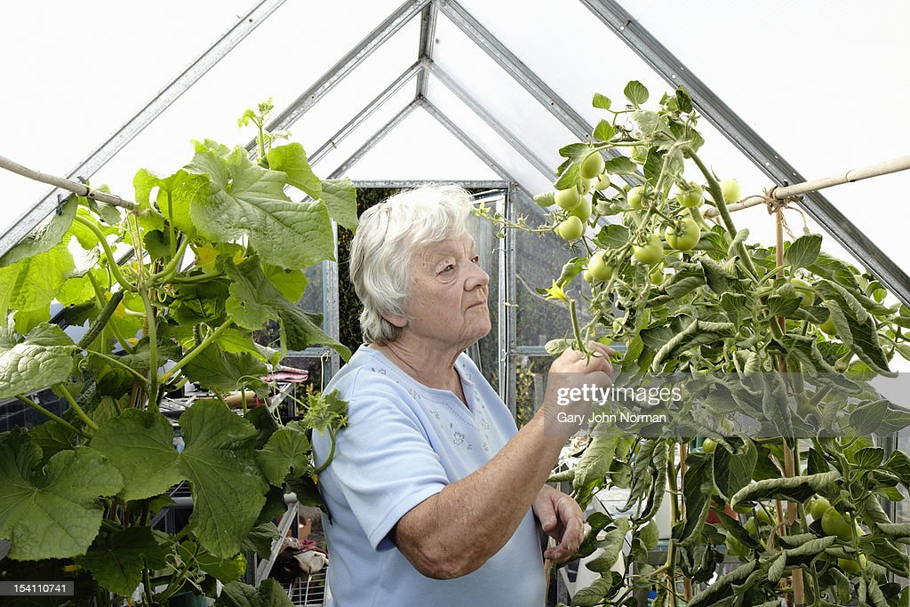 Elderly lady in greenhouse : Stock Photo