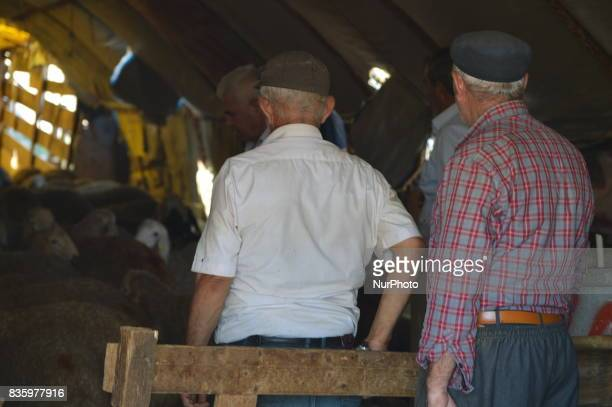 Elderly people look at sacrificial animals at a livestock market in the Yakacik area of Ankara Turkey on August 20 2017 Shepherds have brought their...