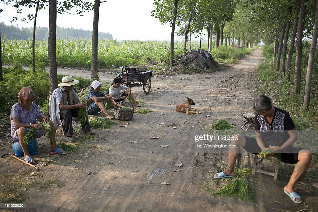 Elderly residents sit in the shade and clean vegetables at a rural village near Fuyang, Anhui Province, China on 28 August 2013. As able-bodied adults seek work in cities in hopes of better income, more and more villages in China are inhabited mostly by the elderly and children.