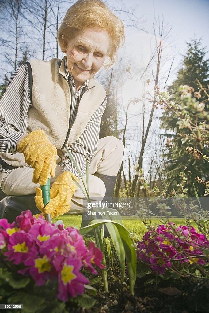 Elderly Woman Gardening  : Stock Photo
