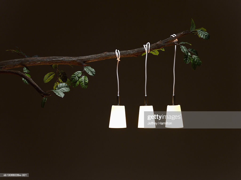 Electric lamp hanging from tree branch, illuminated at night : Stock Photo