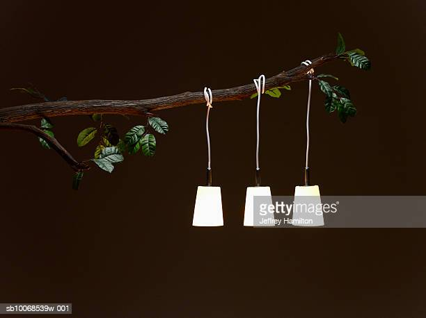 Electric lamp hanging from tree branch, illuminated at night