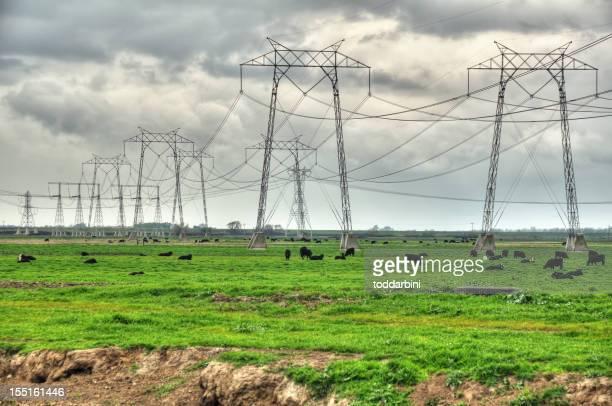 電気 Pylons 、牛(HDR