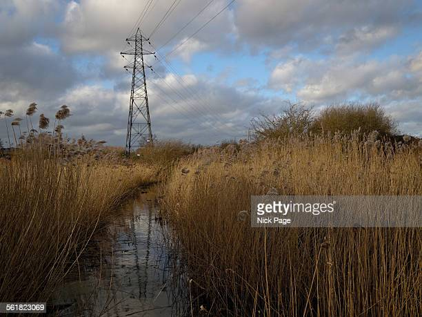 Electricity Pylon on Marshland