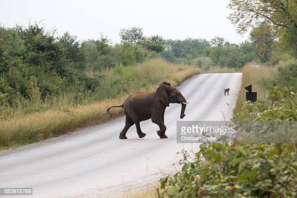 Elefant near Mana Pools National Park