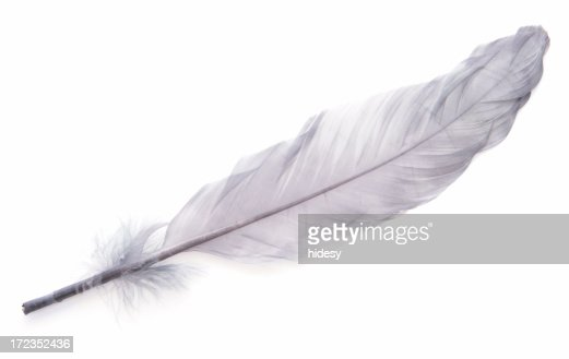 Elegant Feather