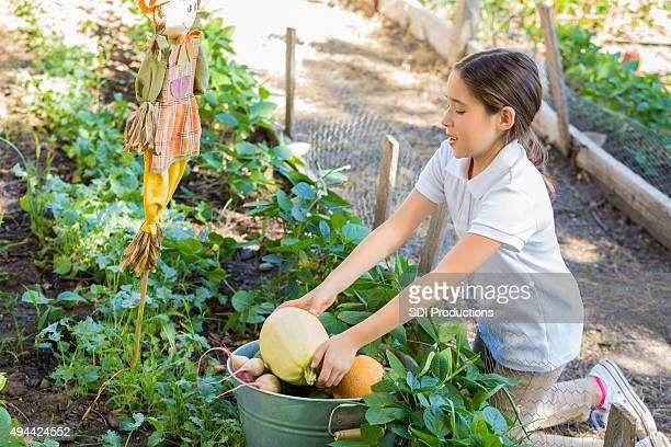 Elementary age student picking vegetables in school garden