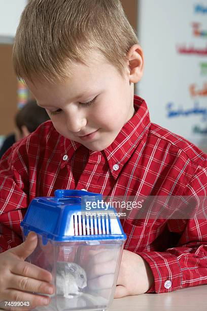 Elementary school boy looks inquisitively at a mouse in a cage