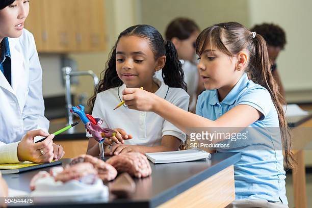 Elementary school girls asking questions during science anatomy class