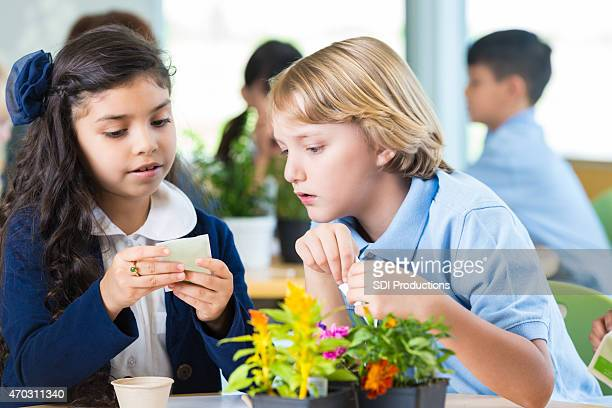 Elementary students are doing science experiment with plants in classroom