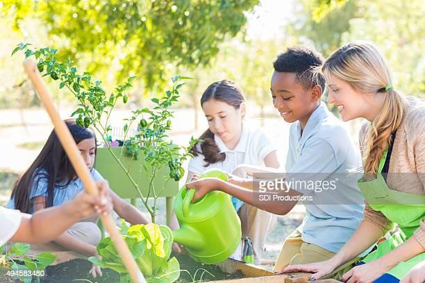 Elementary school-Schüler Pflanzen Gemüse im Garten für science-Klasse