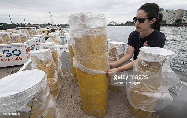 Elena Foti from Foti Fireworks attends to protective film over fireworks as they sit on barges on December 29 2016 in Sydney Australia Sydney's New...